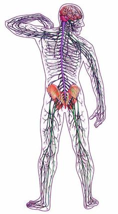 Muscle Pain vs Nerve Pain: Blog by Katey Burgess, LMT of World Tree Therapies. Athens, Ohio