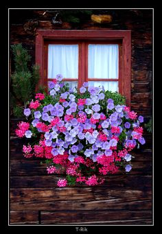 Window Box by mym8rick