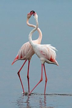 National Geographic Your Shot Tropical Birds, Colorful Birds, Animals Amazing, Cute Animals, Beautiful Birds, Animals Beautiful, Flamingo Pictures, National Geographic Photography, Flamingo Wallpaper
