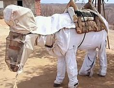.A Brazilian beekeeper has an unexpected assistant: a donkey named Boneco (who has his very own safety suit and protective mask).