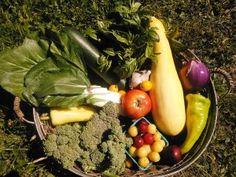 Love Farm Organics | An Organic CSA Family Farm in Oregon
