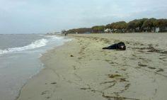 Al menos 21 cuerpos, entre ellos los de varios niños, han aparecido sin vida este martes en dos playas del oeste de Turquía, informa la agencia Reuters. Trataban de alcanzar las