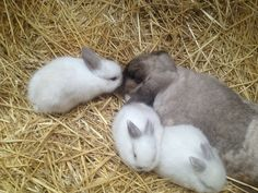 a drove of rabbits Baby Animals, Funny Animals, Cute Animals, Cute Bunny, Adorable Bunnies, Baby Harp Seal, Baby Buns, Fox And Rabbit, Lovely Creatures