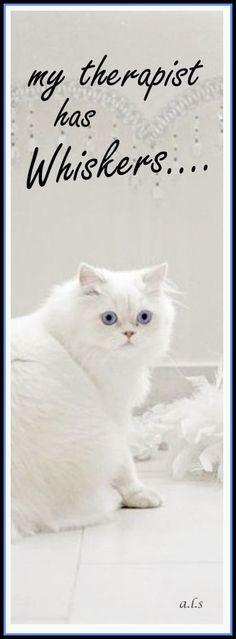 My therapist feline! Cat memes - kitty cat humor funny joke gato chat captions feline laugh photo