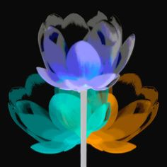 Black Lotus, digital photograph ©2015 Kenneth Hayden, Louisville, KY USA, All Rights Reserved.