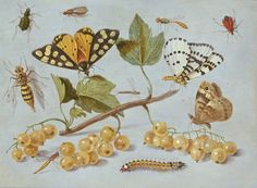 A Flemish artist named Jan van Kessel did this study of butterflies and insects somewhere around 1655. It's part of the collection at the National Gallery of Art in Washington DC.