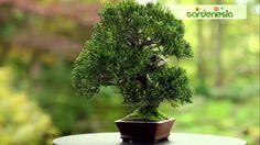 Make Gardening a Good Habit by Growing Garden At Home Bonsai Plants, Potted Plants, Online Plant Nursery, Growing Gardens, How To Know, How To Make, Bulb Flowers, Good Habits, Things To Come