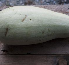Seminte Dovlecei albi Seeds, Vegetables, Flowers, Vegetable Recipes, Royal Icing Flowers, Flower, Florals, Veggies, Floral