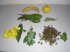 Banane, Apfel, Löwenzahn, Blatt von Königskerze, Blüten und Blätter von die Gemeine Nachtkerze, Gänsefuß, Klee, Zitronenmelisse.