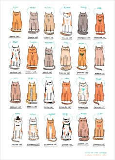 Gemma Correll's limited edition art print at L'Affiche Moderne: Cats of the World