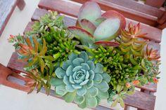 Succulent Art of Carol Booth.  Photo by Laguna Dirt.
