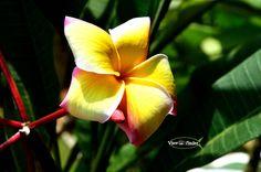 Flower by ashutoshjha