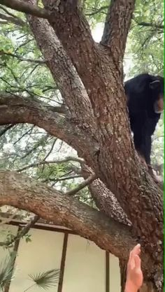A reference to how strong chimpanzees really are. reference A reference to how strong chimpanzees really are. Cute Funny Animals, Funny Animal Pictures, Best Funny Pictures, Cute Creatures, Beautiful Creatures, Animals Beautiful, Chimpanzee, Animals And Pets, Wild Animals