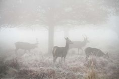 Beautiful Deer Silhouettes Set within Misty Landscapes - My Modern Metropolis