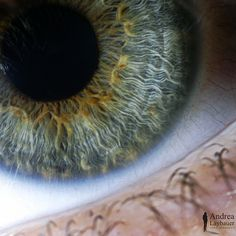 Composition - Close up of an human eye
