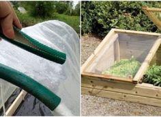Kreatív kerti tippek, hogy bőséges zöldségtermésünk legyen! Aquarium, Goldfish Bowl, Aquarium Fish Tank, Aquarius, Fish Tank