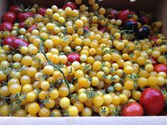 white currant cherry tomatoes