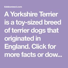 A Yorkshire Terrier is a toy-sized breed of terrier dogs that originated in England. Click for more facts or download the worksheet collections. Terrier Breeds, Terrier Dogs, Top Dog Breeds, Teacup Yorkie, Northern England, Most Popular Dog Breeds, War Dogs, Working Dogs, Sign I