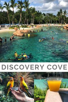 Discovery Cove in Orlando Florida is an all-inclusive day resort where you can enjoy a one-of-a-kind opportunity to swim with dolphins, snorkel among thousands of tropical fish and rays, hand-feed exotic birds, and encounter playful otters. Beaches Near Orlando, Orlando Beach, Visit Orlando, Orlando Travel, Orlando Vacation, Resorts In Orlando Florida, Orlando Disney, Downtown Disney, Hotels In Orlando