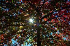 #sifoliage taken at Fort Wadsworth by @oddgirlin