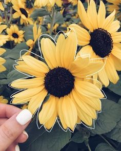 Yellow aesthetic tumblr flowers yellow pinterest flowers oc photo editing ideas colored line around object in focus sunflower mightylinksfo