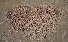 Lepaan miljöö: Joku oli asetellut kävyt sydämen muotoon - Lepaa gardens: Cones in a shape of heart. We love it! How To Dry Basil, Herbs, Herb, Medicinal Plants