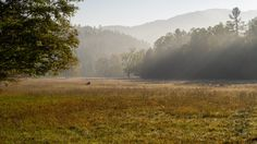 Little Cataloochee developed as an expansion to Cataloochee Valley with many of the sons and daughters of the original founders spreading their wings, albeit just a few miles away. Travel these days…