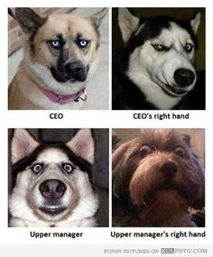 Corporate Hierarchy Cartoons and Comics - funny pictures ... |Stupid Executive