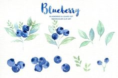 Blueberry watercolor clipart by everysunsun on @creativemarket