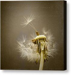 how to paint a dandelion clock acrylics - Google Search