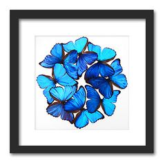 $295 Insectframes.com - Framed butterflies, beetles and insect displays - Cascadia