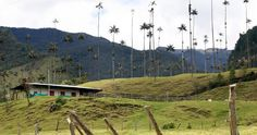 BBC - Travel - Colombia's valley of the palms : Hiking, Colombia