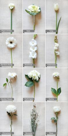 Different white flower arrangements for tables. maybe 3 or 4 total arrangment choices.