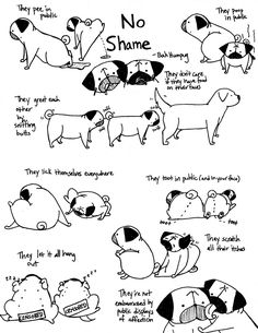 Bah Humpug: Dogs have no shame. Their lack of self consciousness always makes me laugh and smile.