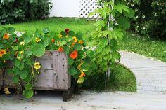 Image result for blomkarse