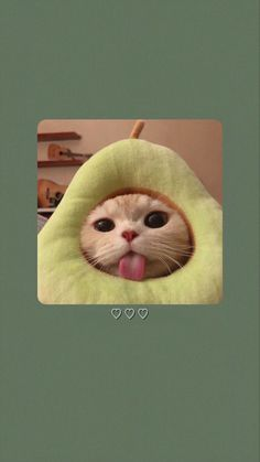 Funny Cat Wallpaper, Cute Disney Wallpaper, Animal Wallpaper, Wallpaper Iphone Cute, Cute Cartoon Wallpapers, Baby Animals Pictures, Cute Animal Photos, Funny Animal Pictures, Cute Baby Cats
