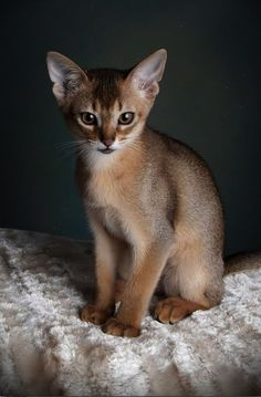 Astounding... Beautiful Cats Videos Dailymotion ;)