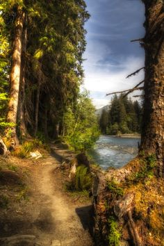 Hoh River Trail, Olympic National Park, Washington - this doesn't look real; it's so beautiful!