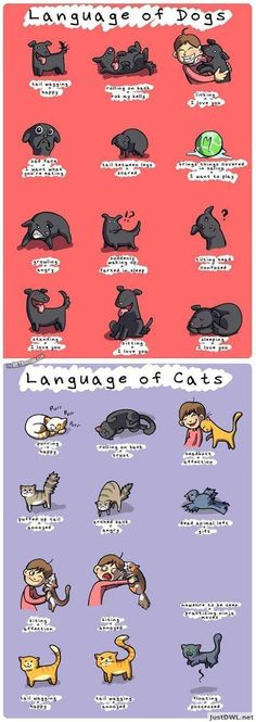 Language of dogs and cats. -- my cat meows at me all the time, and gives me those affectionate stares, and comes when I call him, purrs and head butts me when I cry, also cuddles next to me. -My dog, runs away but eventually comes back,she doesn't come when I call her, she jumps on and scratches the kids, is affectionate but really wild. I love her anyway. My dingy, stinky dog :)