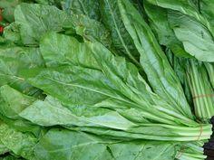 Espinafre está entre os vegetais ricos em proteínas e indicados para os vegetarianos