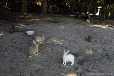 They have a rabbit island too?!