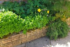 Guests are welcome to help themselves to herbs from our recently planted herb garden at Maxwelton Heating Oil, Log Burner, Herb Garden, Herbs, Cottage, Holiday, Plants, Cozy Nook, Casa De Campo