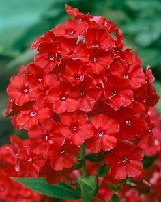 Kukkapenkki for dummies - Starbox Annual Plants, Garden Inspiration, Scarlet, Pop Up, Perennials, Orange, Flowers, Instagram, Haku