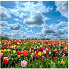 Hand made needlework 3D Diy diamond paintings drill rhinestone Diamond embroidery mosaic Tulip fields pictures by numbers Y473