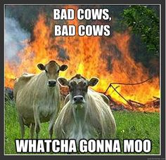 Whatcha gonna moo?