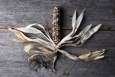 #Flint Corn on Rustic Wood Table  High angle shot of a single cob of Flint corn on a rustic wood table. Also known as Indian Corn Calico Corn and Ornamental Corn.
