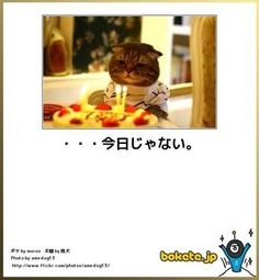 【ボケて】最新ボケランキング&殿堂傑作ネタアーカイブ【bokete】 - NAVER まとめ Funny Cats, Cat Lovers, Dog Cat, Funny Pictures, Cute Animals, Family Guy, Creatures, Kitty, Kawaii