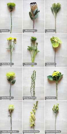 accent flowers