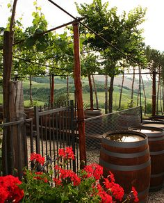 Tuscany, Italy    Vineyard bliss. I want to go back so bad!!