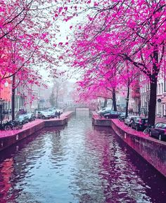 Amsterdam  Check out @izkiz & @deluxefx for stunning colorful posts!!! by wonderful_places